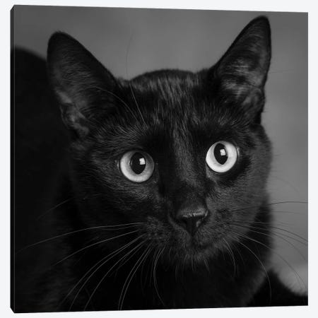 Portrait of a Black Cat Canvas Print #PIM15642} by Panoramic Images Canvas Wall Art