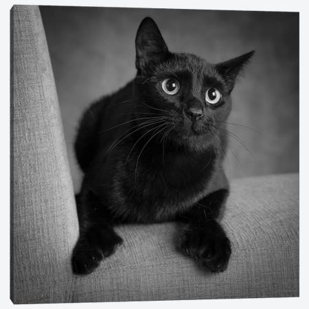 Portrait of a Black Cat on a Chair Canvas Print #PIM15644} by Panoramic Images Canvas Art Print
