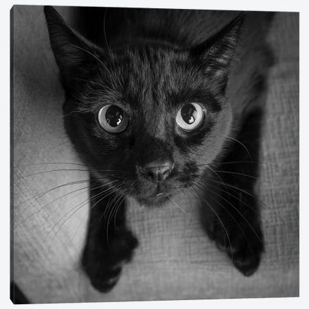 Portrait of a Black Cat on a Chair Canvas Print #PIM15645} by Panoramic Images Art Print