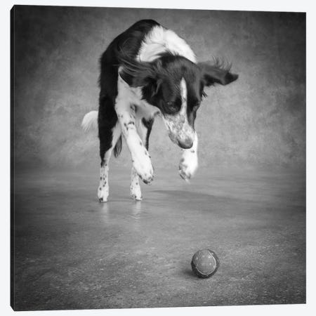 Portrait of a Border Collie Mix Dog Canvas Print #PIM15646} by Panoramic Images Art Print