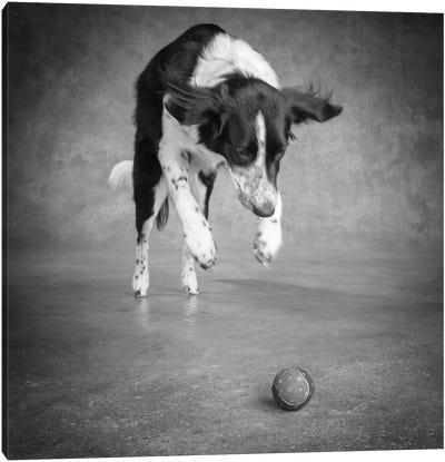 Portrait of a Border Collie Mix Dog Canvas Art Print