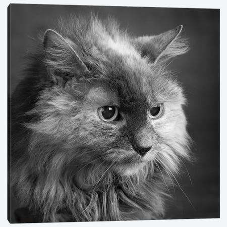 Portrait of a Cat Canvas Print #PIM15649} by Panoramic Images Canvas Wall Art