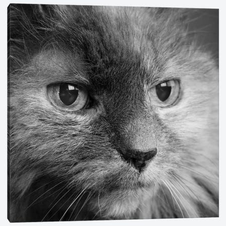 Portrait of a Cat Canvas Print #PIM15650} by Panoramic Images Art Print