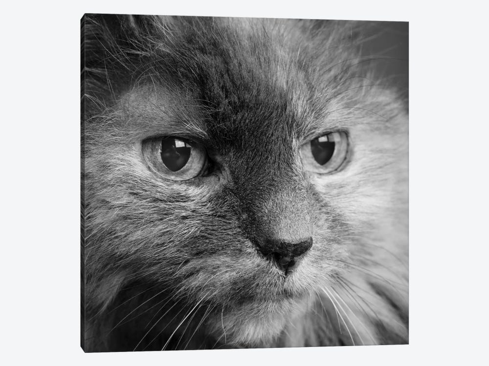 Portrait of a Cat by Panoramic Images 1-piece Canvas Print