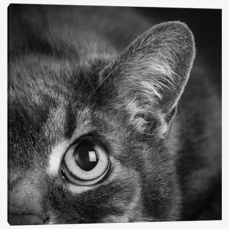Portrait of a Cat 3-Piece Canvas #PIM15651} by Panoramic Images Art Print