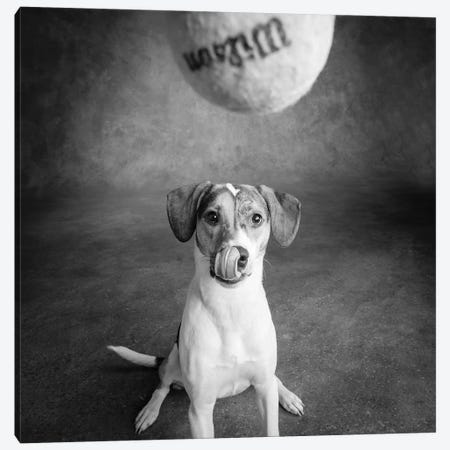 Portrait of a Mixed Dog playing with a Tennis Ball Canvas Print #PIM15660} by Panoramic Images Canvas Wall Art