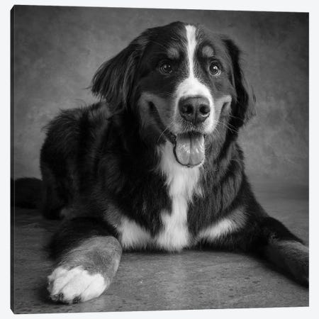 Portrait of Bernese Mountain Dog Canvas Print #PIM15663} by Panoramic Images Canvas Art