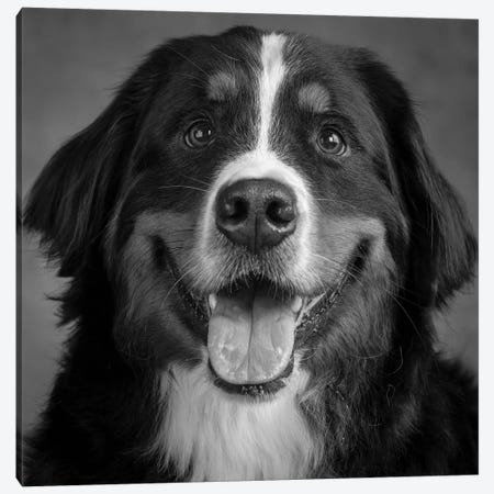 Portrait of Bernese Mountain Dog Canvas Print #PIM15664} by Panoramic Images Canvas Print