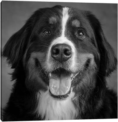 Portrait of Bernese Mountain Dog Canvas Art Print