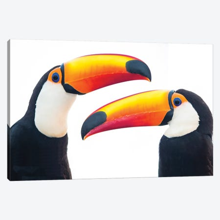 Portrait of toco toucan, Mato Grosso, Brazil Canvas Print #PIM15678} by Panoramic Images Art Print
