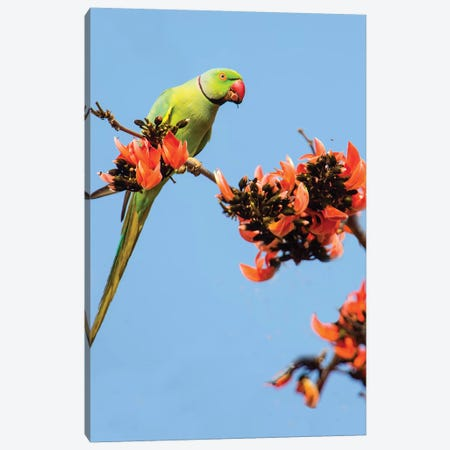 Rose-ringed parakeet  perching on branch, India Canvas Print #PIM15708} by Panoramic Images Canvas Print
