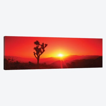 Silhouette of a Joshua tree at dusk, Joshua Tree National Park, California, USA Canvas Print #PIM15739} by Panoramic Images Canvas Artwork