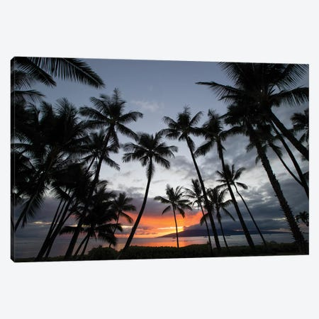 Silhouette of palm trees at dusk, Lahaina, Maui, Hawaii, USA 3-Piece Canvas #PIM15740} by Panoramic Images Canvas Print