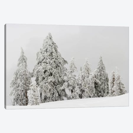 Snow covered trees, Crater Lake National Park, Oregon, USA Canvas Print #PIM15752} by Panoramic Images Canvas Artwork