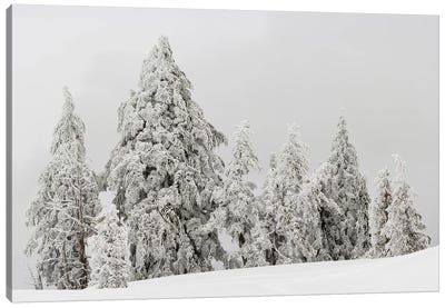 Snow covered trees, Crater Lake National Park, Oregon, USA Canvas Art Print