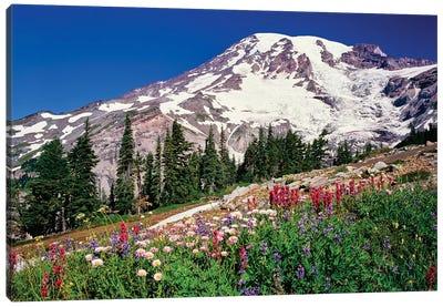 Summer wildflowers bloom in Paradise Park below Mr. Rainier, Mt. Rainier National Park, Washington, USA Canvas Art Print