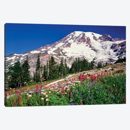 Summer wildflowers bloom in Paradise Park below Mr. Rainier, Mt. Rainier National Park, Washington, USA Canvas Print #PIM15765} by Panoramic Images Canvas Artwork