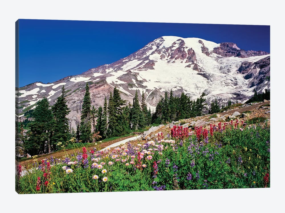Summer wildflowers bloom in Paradise Park below Mr. Rainier, Mt. Rainier National Park, Washington, USA by Panoramic Images 1-piece Canvas Wall Art