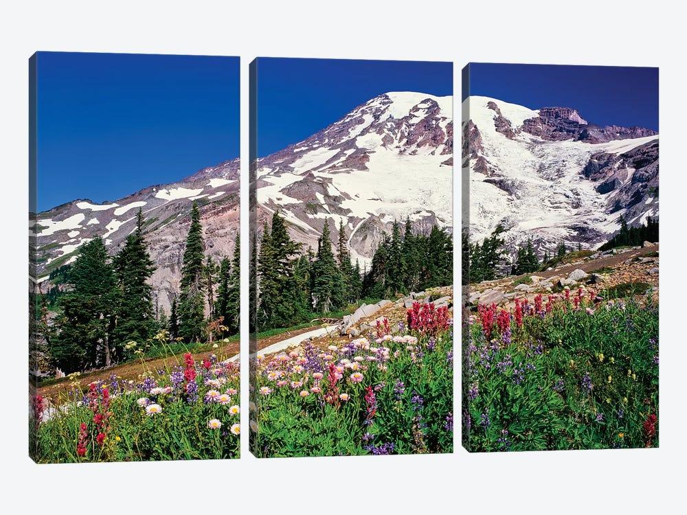 Summer wildflowers bloom in Paradise Park below Mr. Rainier, Mt. Rainier National Park, Washington, USA by Panoramic Images 3-piece Canvas Wall Art