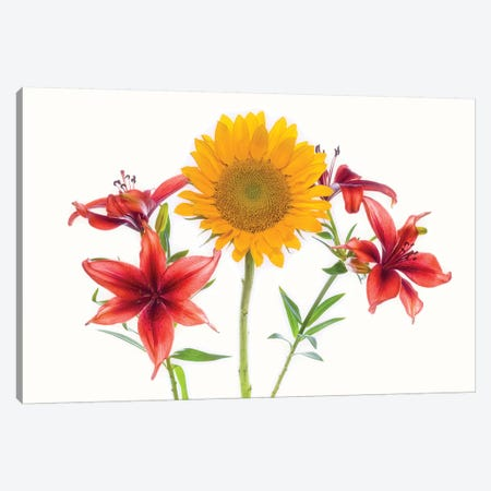 Sunflowers and lilies against white background Canvas Print #PIM15768} by Panoramic Images Canvas Print
