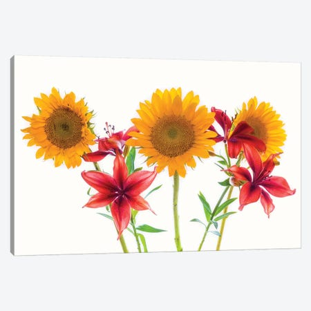 Sunflowers and lilies against white background Canvas Print #PIM15769} by Panoramic Images Canvas Art Print