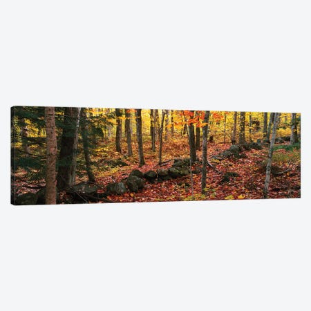 Trees in a forest during autumn, Hope, Knox County, Maine, USA Canvas Print #PIM15799} by Panoramic Images Canvas Artwork