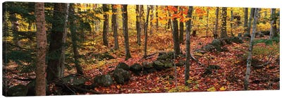 Trees in a forest during autumn, Hope, Knox County, Maine, USA Canvas Art Print