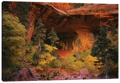 Trees in front of a cave, Zion National Park, Utah, USA Canvas Art Print