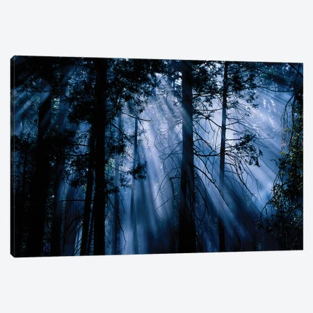 Trees Yosemite National Park CA Canvas Print #PIM15803} by Panoramic Images Canvas Art
