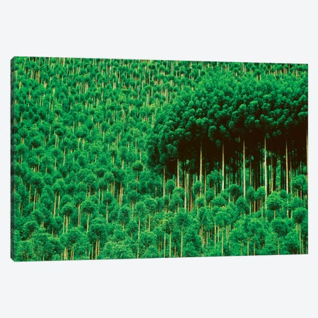 Trees, Takako, Kyoto, Japan Canvas Print #PIM15804} by Panoramic Images Canvas Print