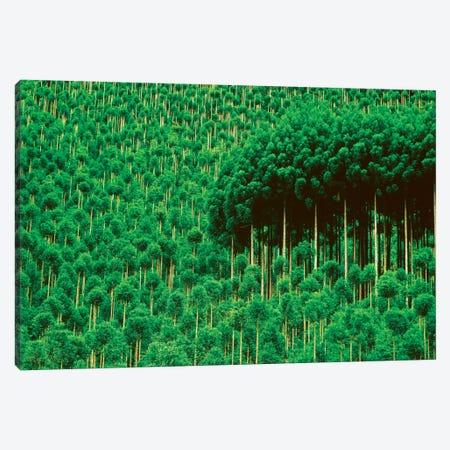 Trees, Takako, Kyoto, Japan Canvas Print #PIM15804} by Panoramic Images Canvas Print