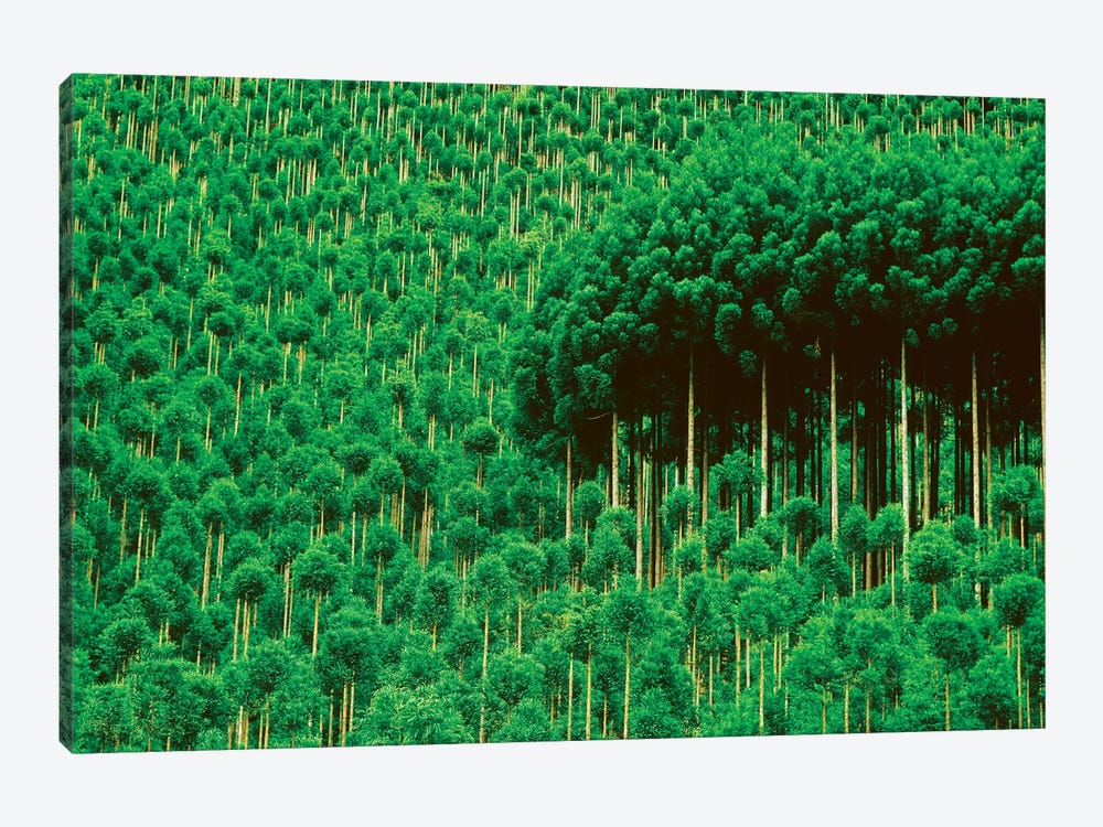 Trees, Takako, Kyoto, Japan by Panoramic Images 1-piece Canvas Art Print
