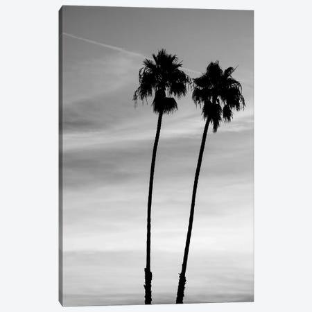 Two palm trees, Santa Barbara, California, USA Canvas Print #PIM15810} by Panoramic Images Canvas Art Print
