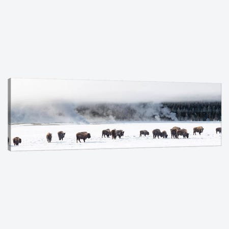 View of Bison herd  Fountain Flats, Yellowstone National Park, Wyoming, USA Canvas Print #PIM15821} by Panoramic Images Canvas Wall Art