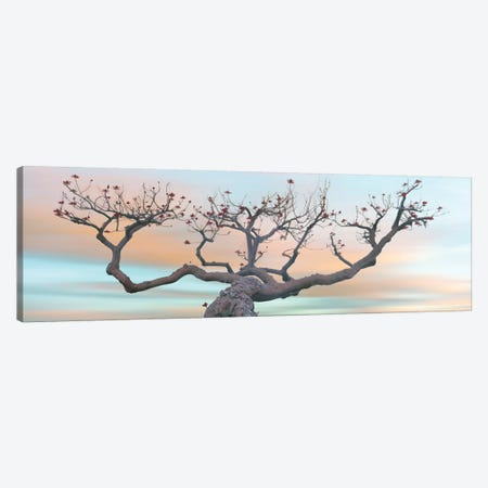 View of Coral Tree  at sunset, La Jolla, California, USA Canvas Print #PIM15825} by Panoramic Images Canvas Print