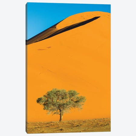 View of dunes and tree on desert, Sossusvlei, Namib-Naukluft National Park, Namibia, Africa Canvas Print #PIM15830} by Panoramic Images Canvas Print