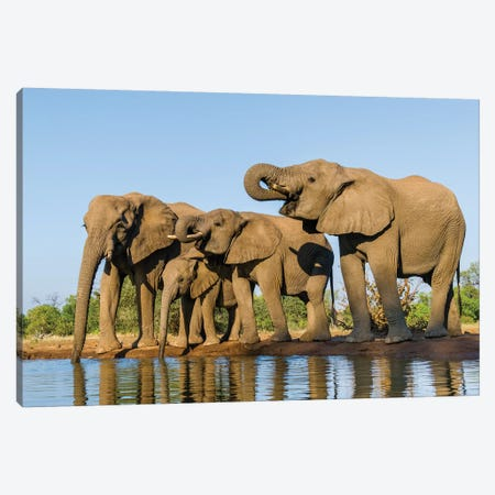 View of Elephant  family at water hole, Botswana, Africa Canvas Print #PIM15831} by Panoramic Images Canvas Art Print