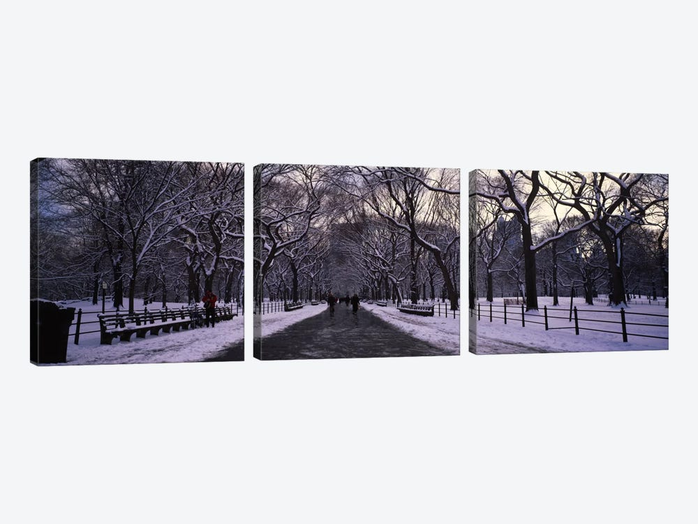 Bare trees in a parkCentral Park, New York City, New York State, USA by Panoramic Images 3-piece Art Print