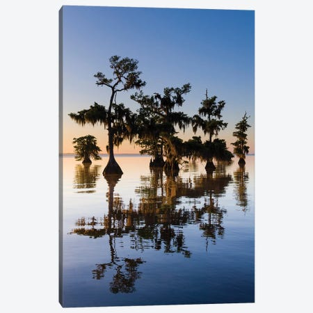 View of Pond Cypress  Blue Lake, Florida, USA Canvas Print #PIM15841} by Panoramic Images Canvas Artwork