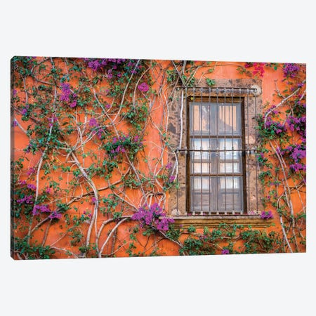 View of wall and window covered by Bougainvillea, San Miguel de Allende, Mexico Canvas Print #PIM15853} by Panoramic Images Canvas Art Print