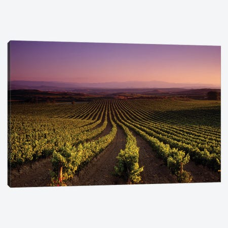 Vineyard on a landscape at dusk, St. Tropez, Provence, Provence-Alpes-Cote D'azur, France Canvas Print #PIM15856} by Panoramic Images Canvas Art