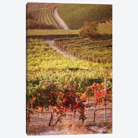 Vineyards, Barbaresco DOCG, Piedmont, Italy Canvas Print #PIM15857} by Panoramic Images Canvas Art