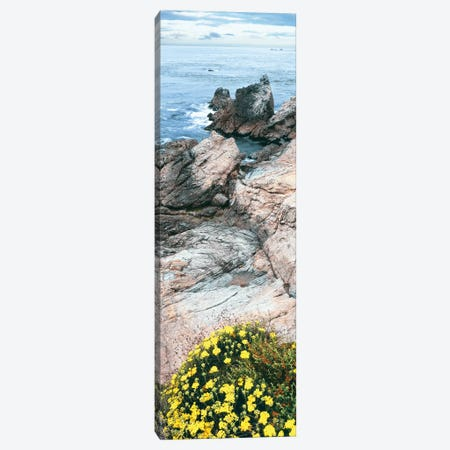 Yellow wildflowers on Pacific Ocean shore, Point Lobos State Natural Preserve, Carmel-By-The-Sea, California, USA Canvas Print #PIM15887} by Panoramic Images Art Print