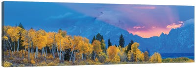 Aspen Tree Forest In Autumn At Sunset And Teton Range, Grand Teton National Park, Wyoming, USA Canvas Art Print