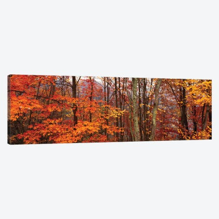 Autumn Trees In Great Smoky Mountains National Park, North Carolina, USA Canvas Print #PIM15919} by Panoramic Images Canvas Wall Art