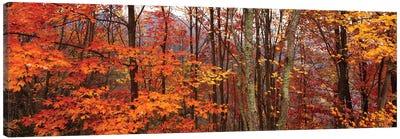 Autumn Trees In Great Smoky Mountains National Park, North Carolina, USA Canvas Art Print