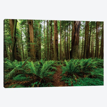 Avenue Of Giants And Giant Redwood Forest Along Route 101, California, USA 3-Piece Canvas #PIM15920} by Panoramic Images Canvas Art Print