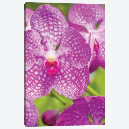 Close-Up Of Orchid Flowers, Sarasota, Florida, USA 3-Piece Canvas #PIM15937} by Panoramic Images Art Print