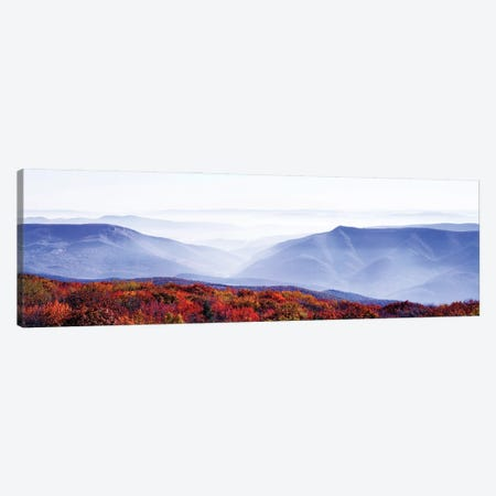 Dolly Sods Wilderness Area, Monongahela National Forest, West Virginia, USA Canvas Print #PIM15944} by Panoramic Images Canvas Wall Art