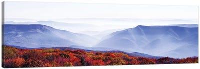 Dolly Sods Wilderness Area, Monongahela National Forest, West Virginia, USA Canvas Art Print